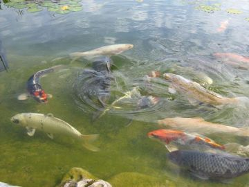 Dating Site Fish In Pond