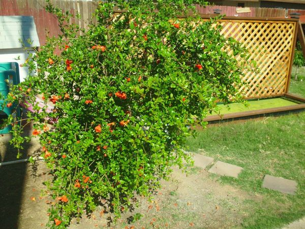 Free class backyard orchard planning saturday 10 26 for Garden pool meetup