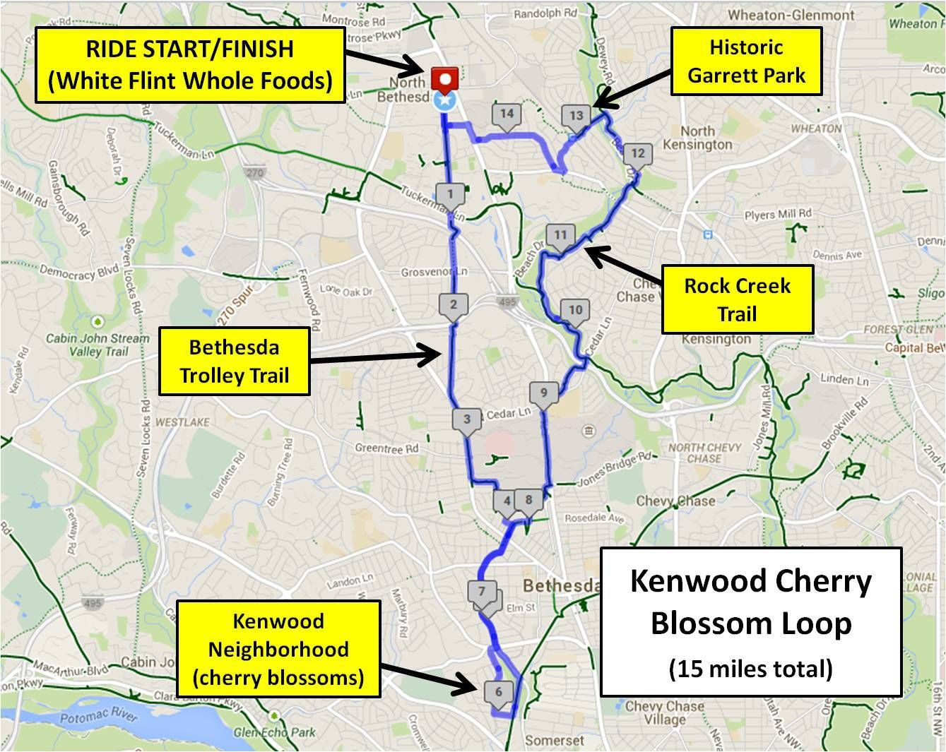 The Kenwood Cherry Blossom Loop (15 miles) | Bike Rockville: Casual ...