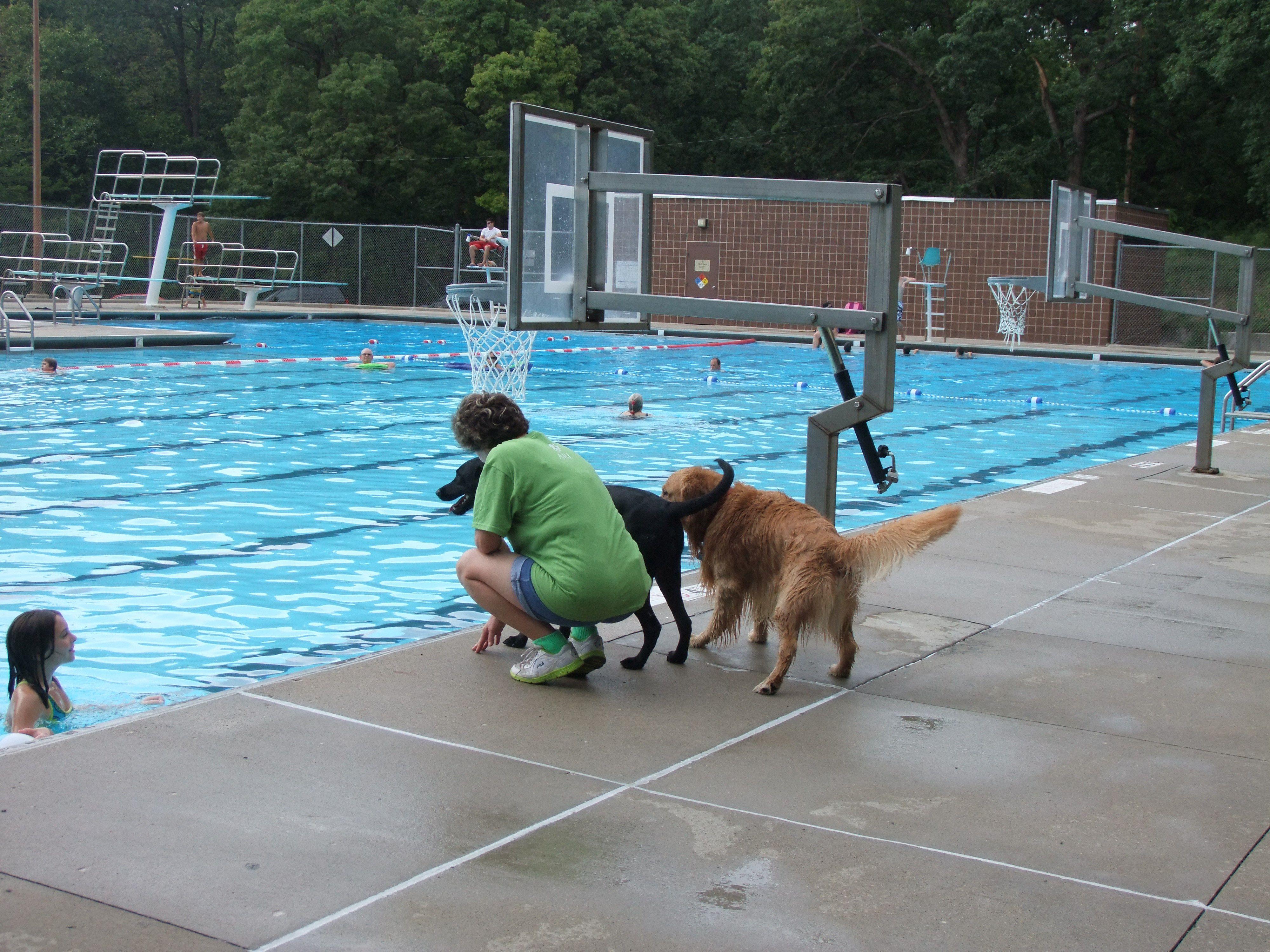 Photos West Des Moines Dog Walking Club West Des Moines Ia Meetup