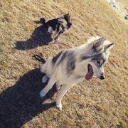 Mexican Dog Adoption Victoria Bc