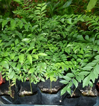 Free class how to grow cook the curry plant sat 12 08 for Garden pool meetup