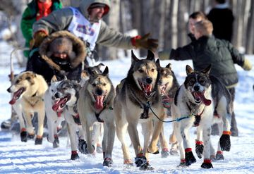 The Iditarod - History, Overview of The Last Great Race